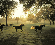 Horse Farm Morning Wallpaper Mural