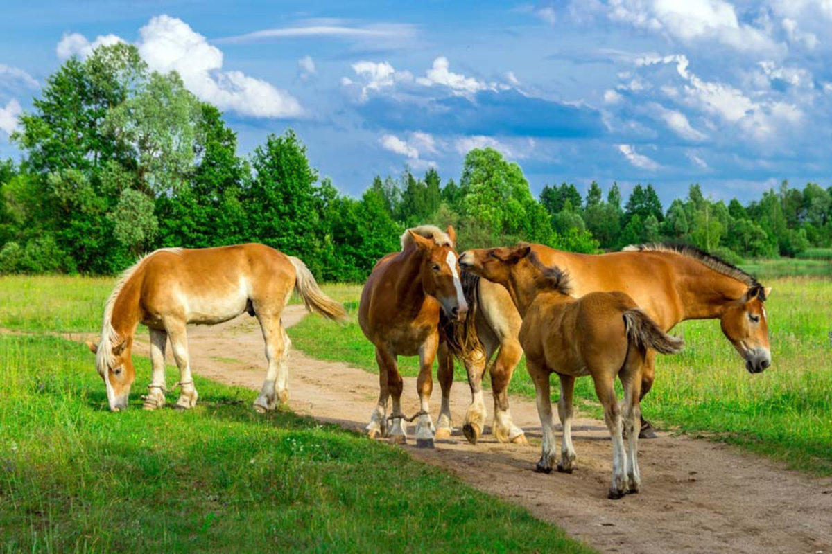 Horses On A Path In The Green Grass Mural Wallpaper