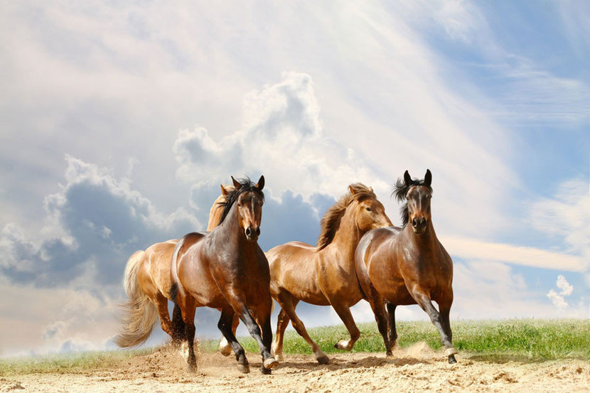 Horse Race featuring four brown and tan horses racing through a sandy pasture against a cloudy blue sky