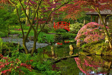 Japanese Garden in Spring Mural Wallpaper
