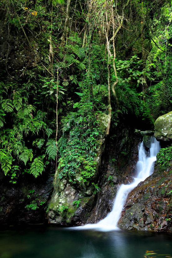 Jungle With Waterfall Mural Wallpaper