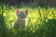 Kitten in the Grass Mural Wallpaper