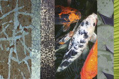 Koi Pond 2 Wallpaper Mural