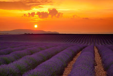 Lavender Sunset Mural Wallpaper