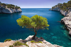 Lone Pine Tree Mural Wallpaper