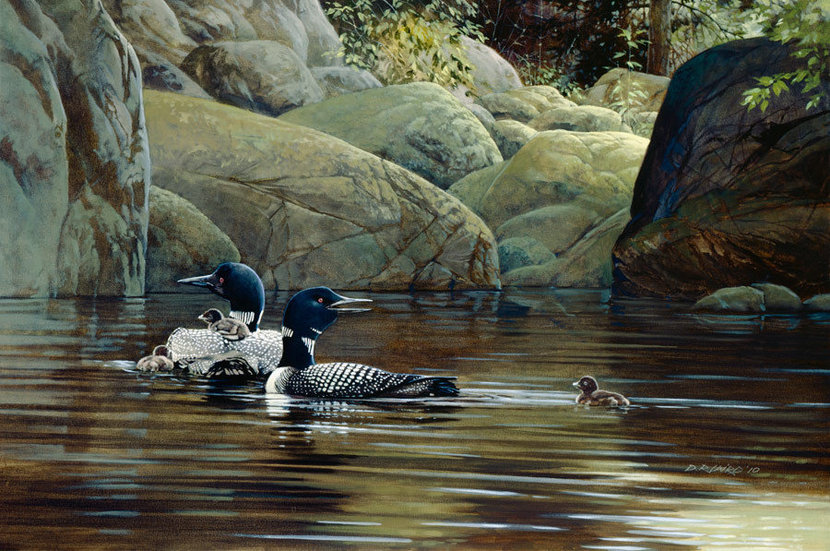Loons on the Lake Wallpaper Mural