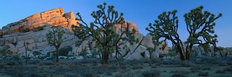 Lost Horse Valley, Joshua Tree National Park, CA Wall Mural