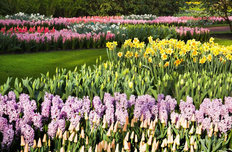 Hyacinth Garden Wallpaper Mural