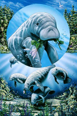 Love Manatee Wall Mural