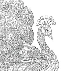 Lovely Peacock Illustration Mural Wallpaper