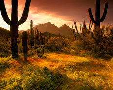 Lower Sonoran Sunrise Wallpaper Mural