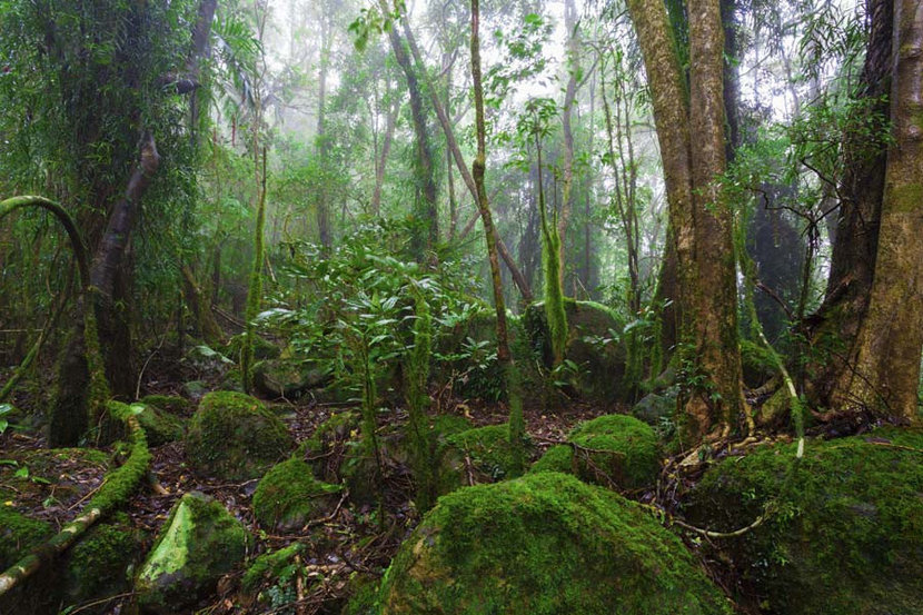 a misty secluded scene featuring dark wet mossy rocks underfoot and a canopy of tall green trees overhead