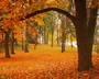 Fall nature wallpaper of Manito Park in Autumn