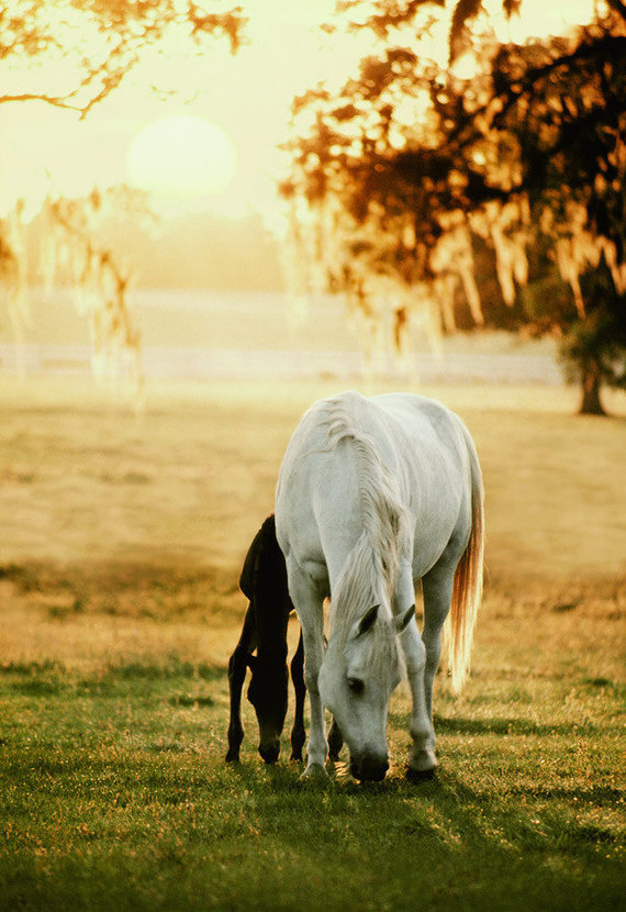 Mare With Foal Grazing Wall Mural