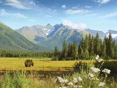 Meadow In The Mountains Wall Mural