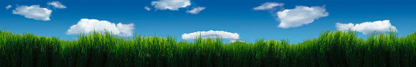 Melba Grass And Clouds Wall Mural