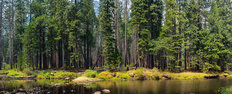 Merced River In Yosemite Forest Wall Mural