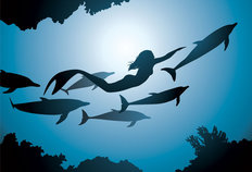 Mermaid and Dolphin Silhouette Wall Mural