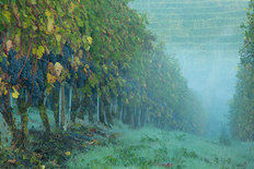 Misty Morning in the Vineyard Wallpaper Mural