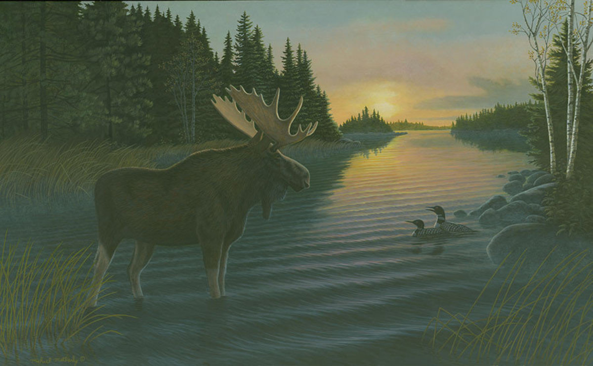 Misty Morning Moose Wallpaper Mural