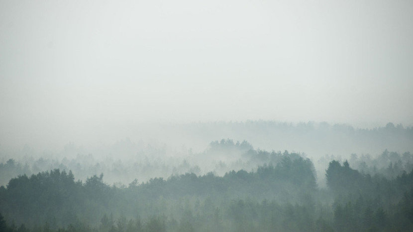 Treetops with misty haze covers the treetops of a dense forest, creating a natural ombre-like effect