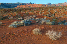 Mojave Desert, Valley of Fire State Park, Nevada Wallpaper Mural