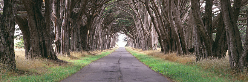 Monterey Cypress Trees Along A Road Wall Mural