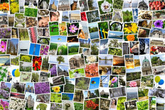 Mosaic Collage Of Photos Wall Mural