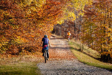 Mountain Biker in Autumn Forest Wallpaper Mural