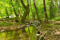 Mountain Creek In The Old Forest Mural Wallpaper