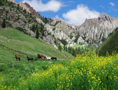 Mountain Horses Wallpaper Mural