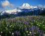Mt. Baker Snoqualmie Nat. Forest Meadows Wall Mural