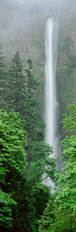Multnomah Falls, Columbia River Gorge, Oregon Wallpaper Mural