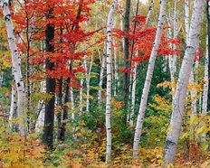 New Hampshire Autumn Wallpaper Mural