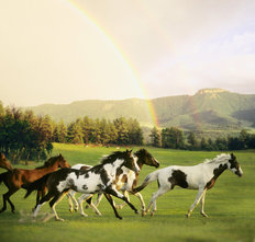 Paint Horses With Rainbow Mountains Mural Wallpaper