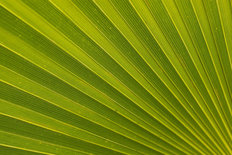 Palm Leaf Mural Wallpaper