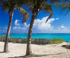 Palm Shaded Beach, Anguilla Wall Mural