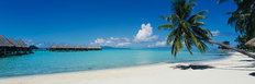 Palm Tree On Moana Beach, Bora Bora Mural Wallpaper
