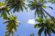 Palm Tree Sky Wall Mural