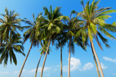 Palm Trees At A Tropical Coast Mural Wallpaper