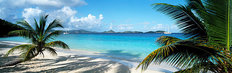 Palm Trees On The Beach US Virgin Islands Mural Wallpaper