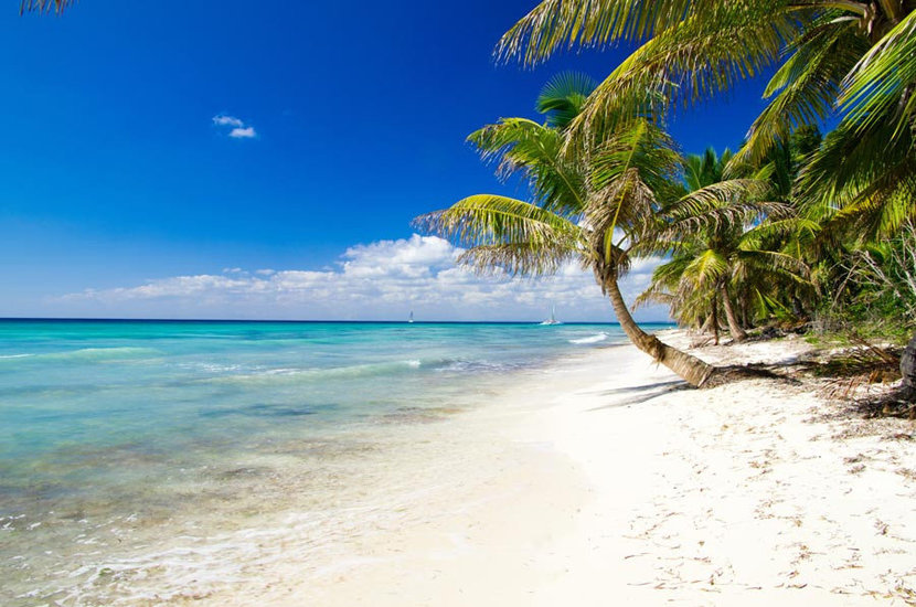 White Sand Beach And Palm Trees Wallpaper Mural