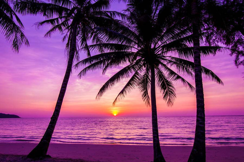 Palm Trees Silhouette At Sunset Wallpaper Mural