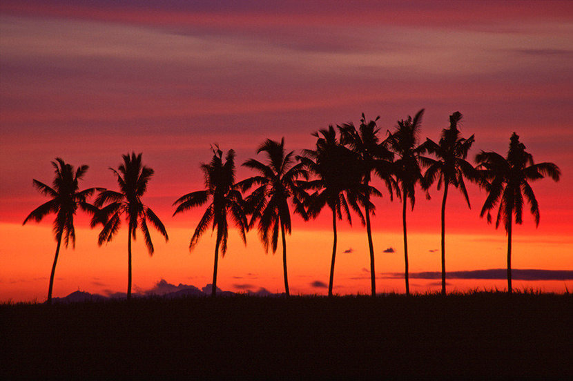 Palm Trees & Sunset, Queens Road, Fiji Wall Mural