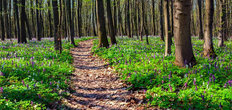 Spring Forest Floor Mural Wallpaper