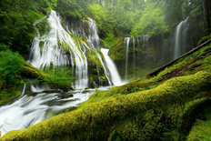 Panther Creek Falls in Spring Wall Mural