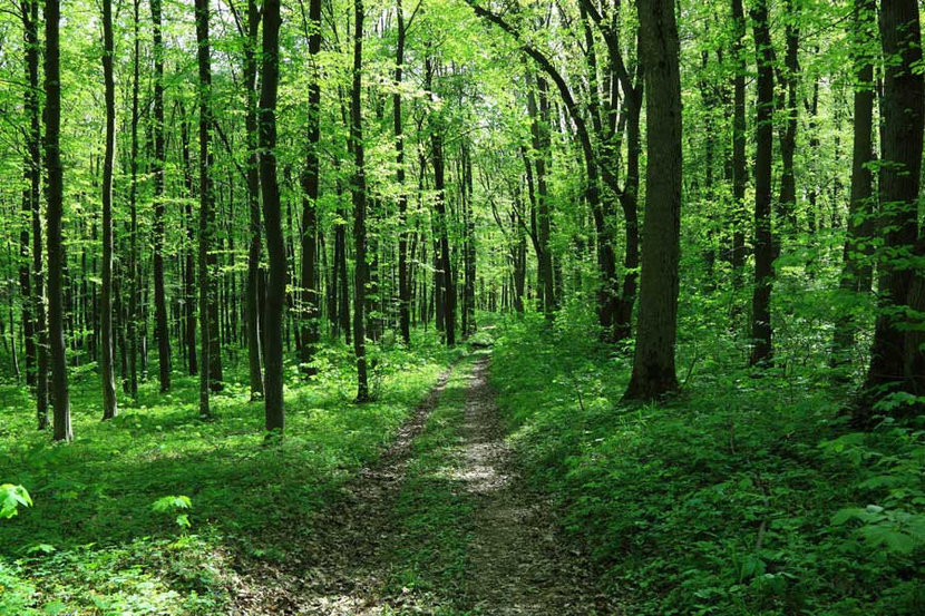Path In Spring Green Forest Wall Mural