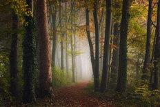 Path Through Autumn Colorful Forest Wall Mural
