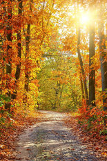 Pathway In The Autumn Forest Wallpaper Mural