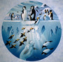 Penguins Playground Wall Mural